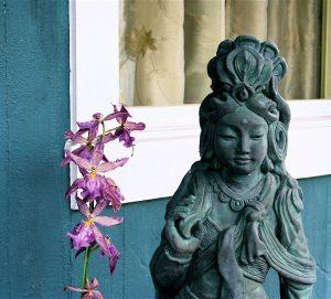 Kwan Yen gorgeous w orchid